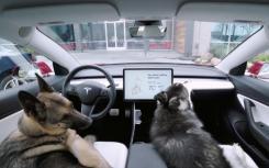 """不要砸窗户:特斯拉的""""狗模式""""说小狗很好"""